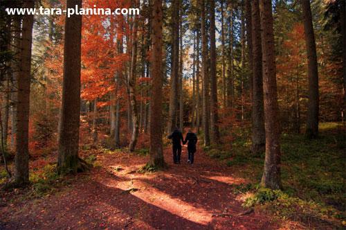 Zlatibor i Bajina Bašta nosioci eko turizma