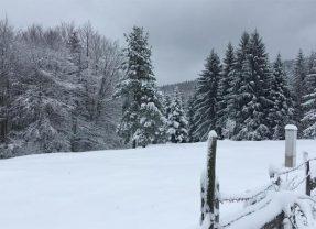 Prvi sneg i srne na planini Tari.