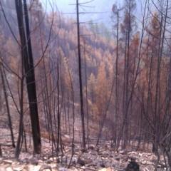 Obnova šume na Tari počinje krajem oktobra