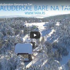 Snimak sa Kaluđerskih Bara na Tari od prošle zime.